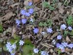 Wenn die Natur im Frühjahr wieder sprießt, spielt guter Boden seine Trümpfe aus.