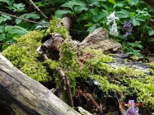 Moose und Flechten auf mürbem Baumholz © Paul Bock