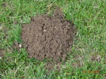 Maulwurfhügel - Bakterien und andere Bodenlebewesen lockern den Boden auf © Paul Bock