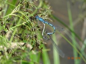 ein anderes kleines Wunder der Natur - copyright Paul Bock