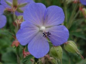Kleiner Blumengruß für Sie © Paul Bock