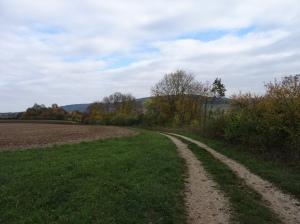 Flurweg mit Buschsaum im Herbst © Paul Bock