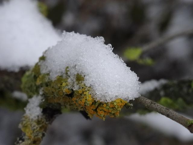 Schneekristalle auf trockenem Zweig © Paul Bock
