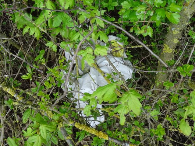 Achtlos weggeworfene Plastikfolie verwittert im Busch © Paul Bock