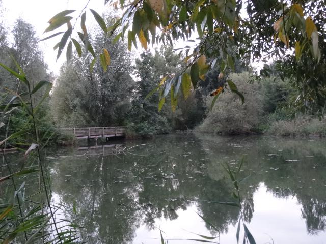 Feuchtgebiet am Rande des Altmühlsees copyright Paul Bock